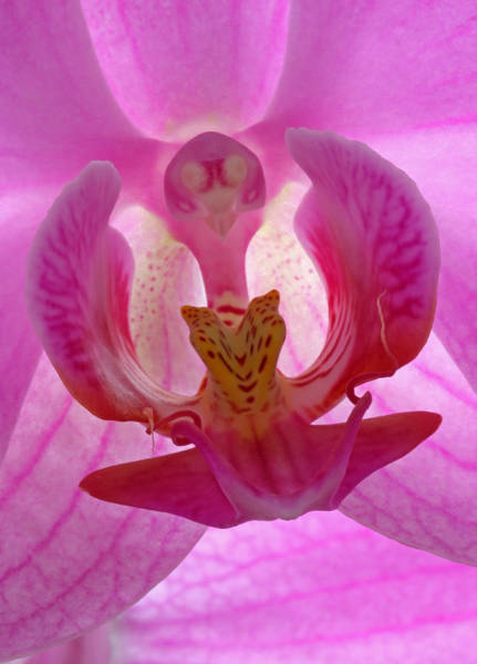 Neon Pink Photograph - Extremely Loud And Incredibly Close by Juergen Roth