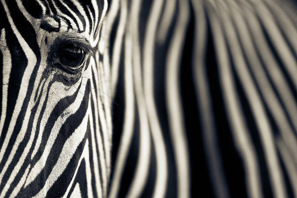 Close-up Photograph - Eye & Stripes by Mario Moreno