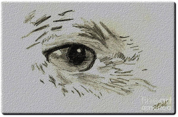 Drawing - Eye - A Pencil Drawing By Marissa by Marissa McAlister