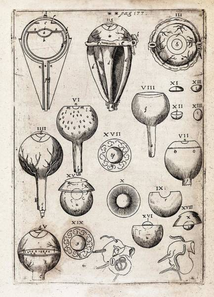 1604 Photograph - Eye Anatomy by Middle Temple Library