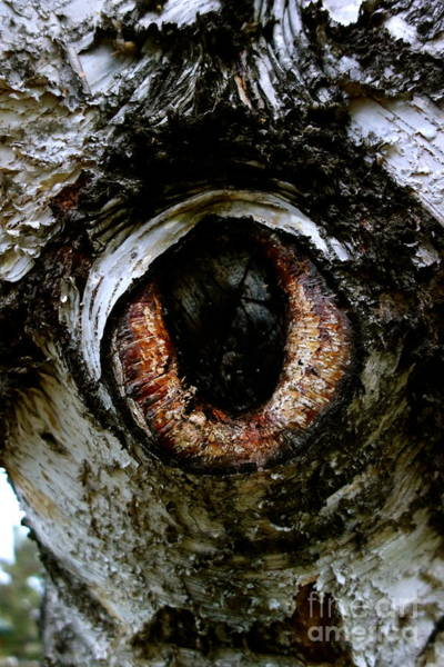 Photograph - Eye In The Tree 1 by Jacqueline Athmann