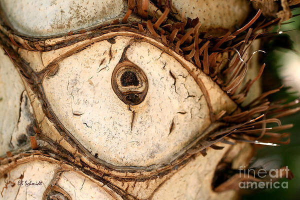 Photograph - Eye Of A Lacy Tree by E B Schmidt