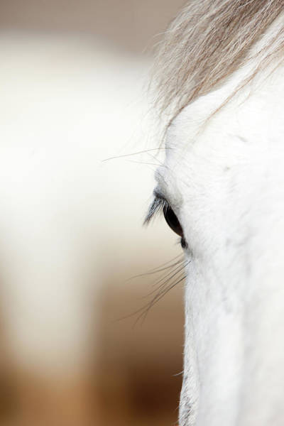 Mare Photograph - Eye Of A White Horse by Irenetinta