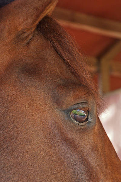 Mare And Foal Photograph - Eye Of The Dreamer - Purebred Pony by Gill Billington