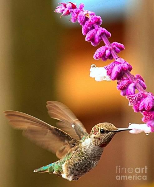 Photograph - Eye Of The Hummingbird by Adam Jewell