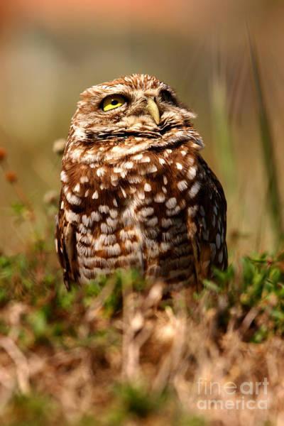Photograph - Burrowing Owl Sky by John F Tsumas