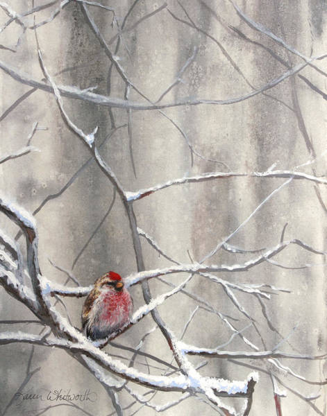 Subtle Painting - Eyeing The Feeder Alaskan Redpoll In Winter by Karen Whitworth
