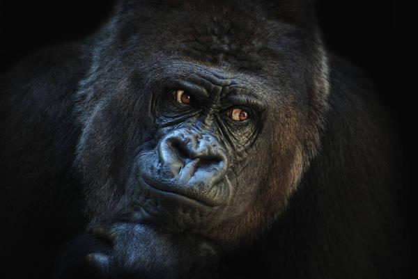 Monkey Wall Art - Photograph - Eyes Left by Joachim G Pinkawa