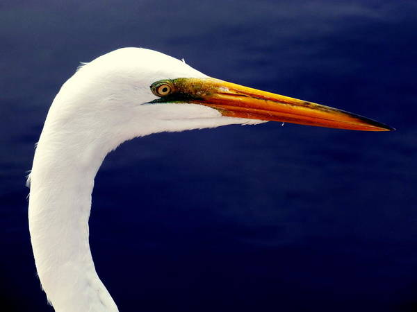 Coastal Marshes Photograph - Eyes Of Steel by Karen Wiles