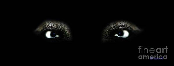 Photograph - Eyes Of The Predator by E B Schmidt