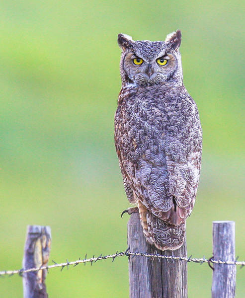 Photograph - Eyes Wide Open by Kevin  Dietrich