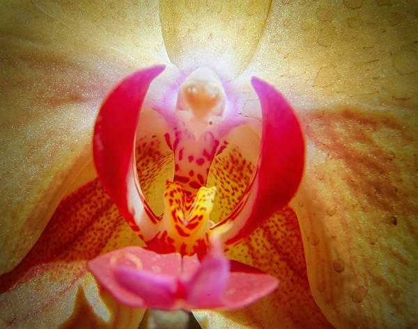 Photograph - Face In The Orchid by Barry Weiss