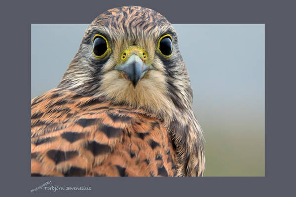 Photograph - Face To Face by Torbjorn Swenelius