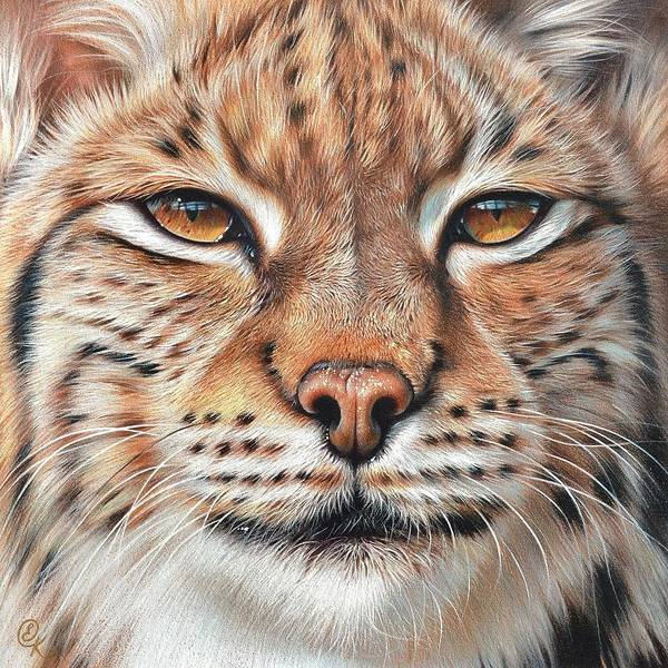 Drawing - faces of the Wild - Lynx by Elena Kolotusha