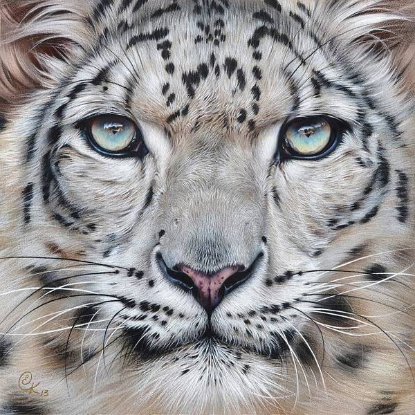 Mixed Media - Faces Of The Wild - Snow Leopard by Elena Kolotusha