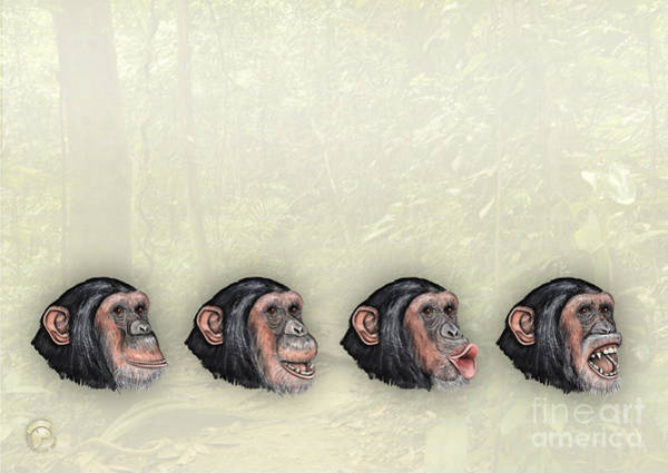 Painting - Facial Expressions Of Chimpanzees Pan Troglodytes - Zoo Interpretive Panel - Mimik Schimpansen by Urft Valley Art