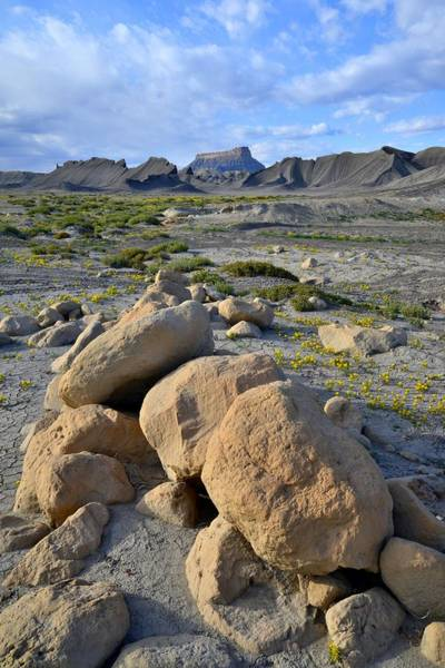 Photograph - Factory Butte Flowers by Ray Mathis