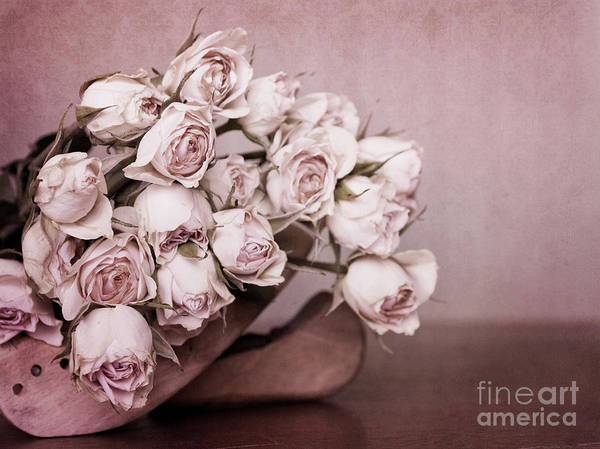 Pink Rose Photograph - Fade Away by Priska Wettstein