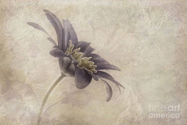 Flower Head Photograph - Faded Beauty by John Edwards