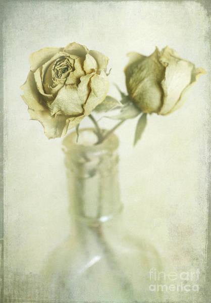 Rosy Photograph - Faded Dreams by Elena Nosyreva