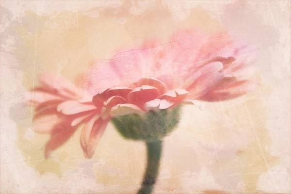 Wall Art - Photograph - Faded Gerber by Cathie Tyler