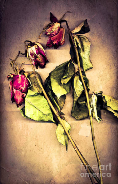 Romantic Flower Photograph - Faded Glory by Jan Bickerton