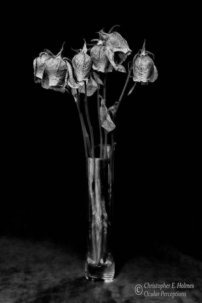Photograph - Faded Long Stems - Bw by Christopher Holmes