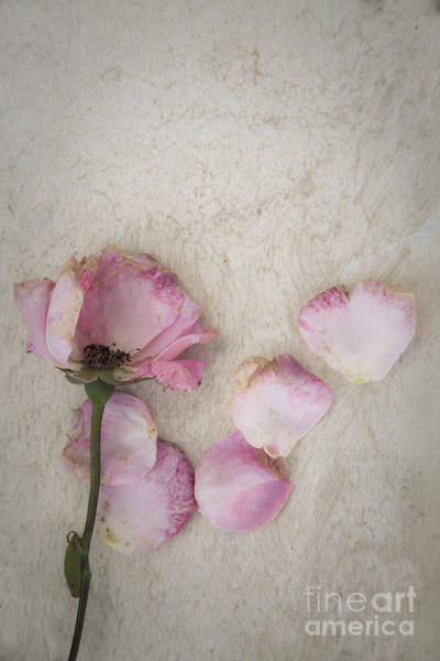 Photograph - Faded by Maria Heyens