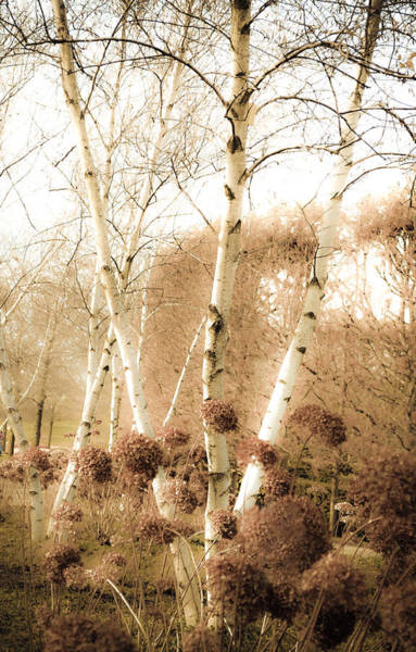 Chicago Botanic Garden Photograph - Fading Fall by Julie Palencia