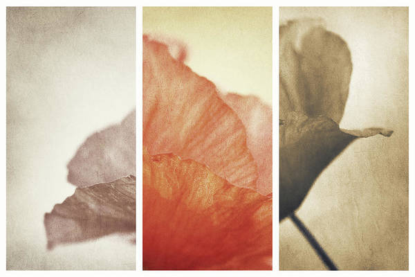 Filter Photograph - Fading Memories by Gustav Davidsson