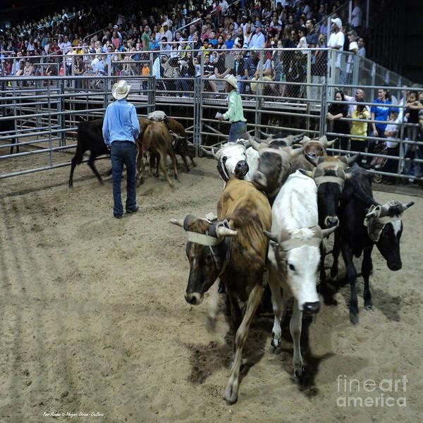 Photograph - Fair Rodeo by Megan Dirsa-DuBois