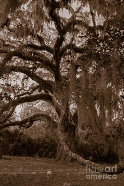 Photograph - Fairchild Oak - Handshake by Kathi Shotwell
