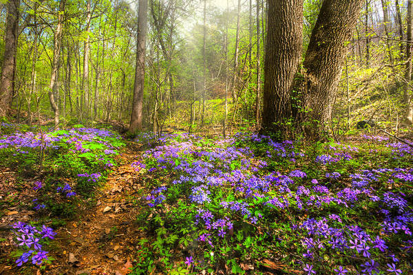 Chilhowee Photograph - Fairies Forest by Debra and Dave Vanderlaan