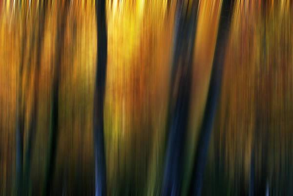 Wall Art - Photograph - Fairy Forest by Yuri San