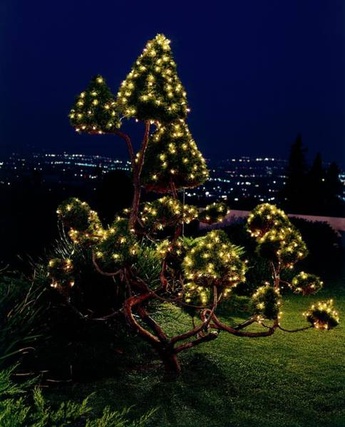 Holiday Photograph - Fairy Lights In A Tree by Leland Y. Lee