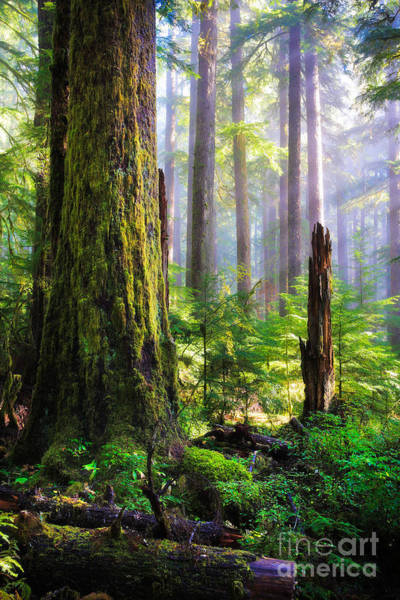 Olympic Peninsula Photograph - Fairy Tale Forest by Inge Johnsson