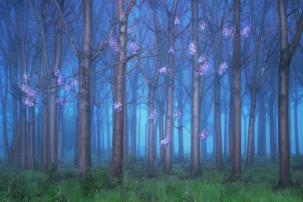 Wall Art - Photograph - Fairyland by Jingshu Zhu