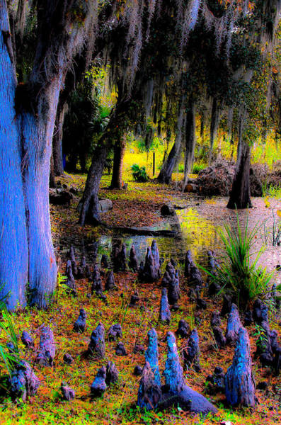 Blacklight Photograph - Fairyland Of Gnomes by DigiArt Diaries by Vicky B Fuller
