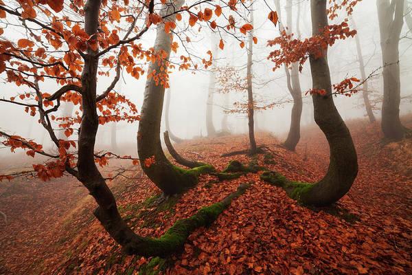 Autumn Season Wall Art - Photograph - Fairytale Forest by Martin Rak