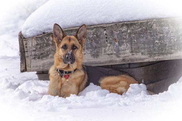 Photograph - Faithful German Shepherd by Eleanor Abramson