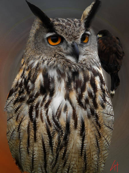 Photograph - Falco With Owl Alba Spain  by Colette V Hera  Guggenheim