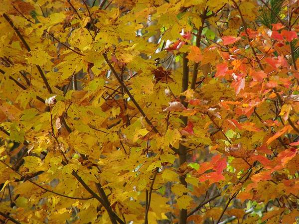 Photograph - Fall 08-004 by Mario MJ Perron