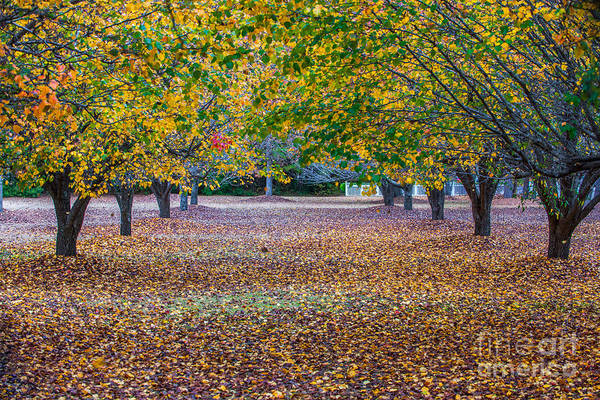 Photograph - Fall Allee by Dale Powell
