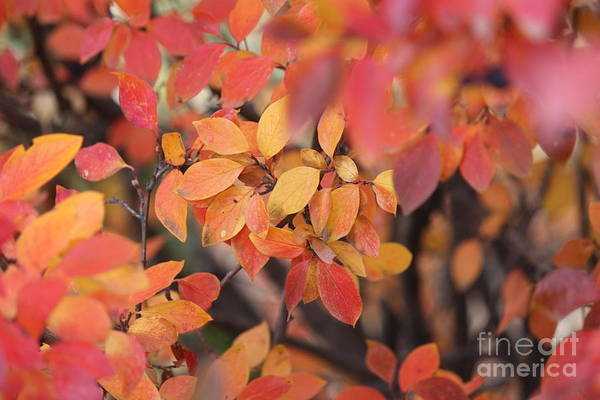 Photograph - Fall by Ann E Robson