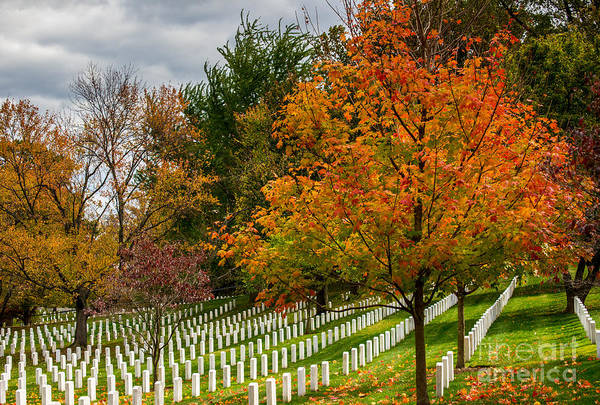 Tombstone Photograph - Fall Arlington National Cemetery  by Gary Whitton