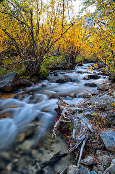 River Wall Art - Photograph - Fall At Big Pine Creek by Cat Connor