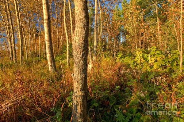 Photograph - Fall At Isle Royale by Adam Jewell