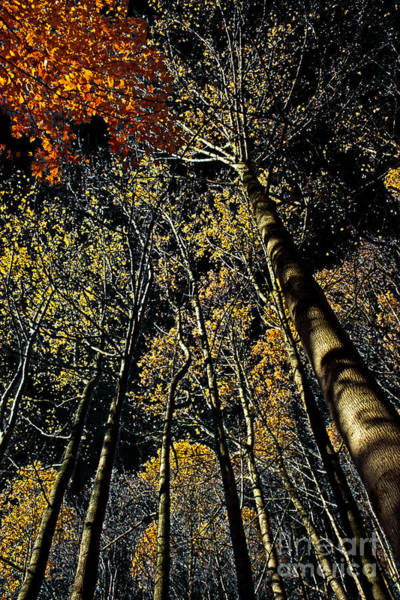 Reach For The Sky Wall Art - Photograph - Fall At Night by Tom Gari Gallery-Three-Photography
