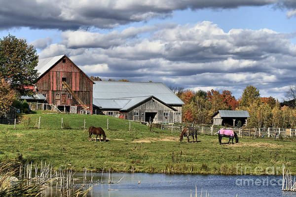 Photograph - Fall At The Horse Farm by Deborah Benoit