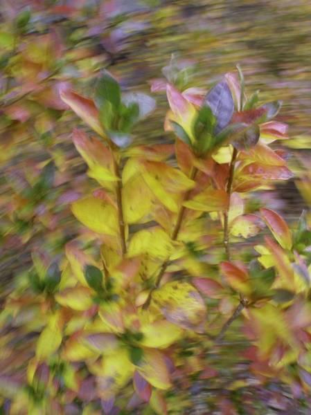 Photograph - Autumn Azaleas 3 by Bernhart Hochleitner